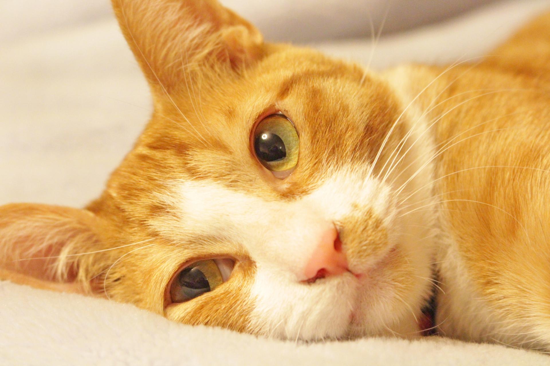 猫を飼いたい!でも家族が反対している。説得までの過程と方法