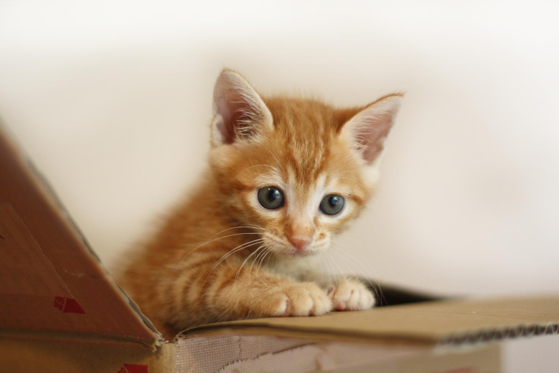 猫が引っ越しで鳴く原因と猫のために飼い主ができるポイント