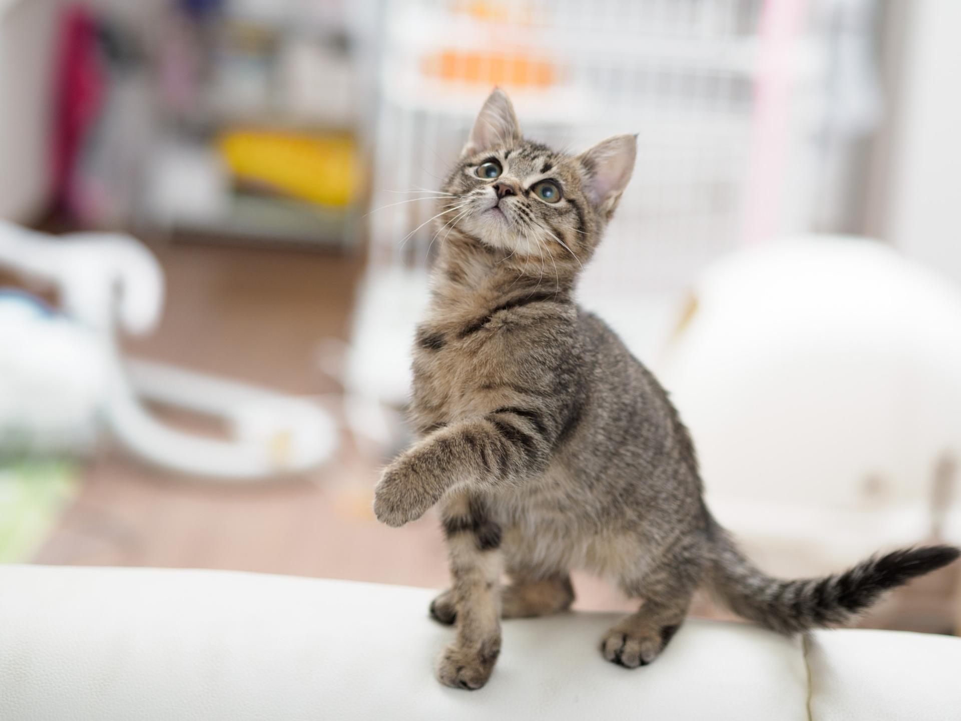 猫が掃除機を好きって本当?掃除機好きな猫と掃除機が嫌いな理由